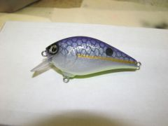 purple back shad