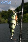 European Perch Crankbait