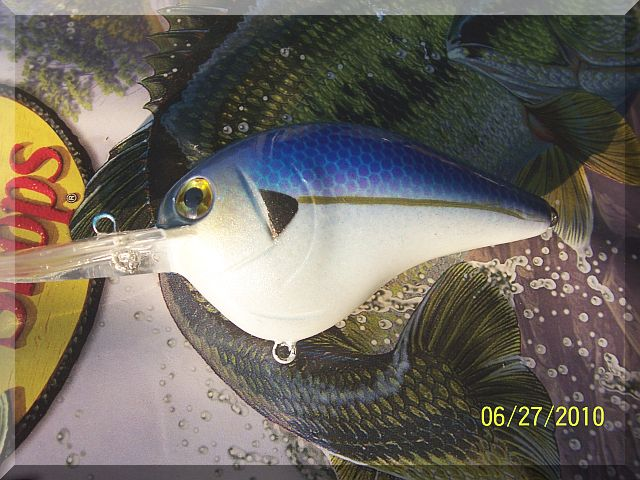 Threadfin Shad.JPG