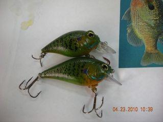 Predator Bass bluegills