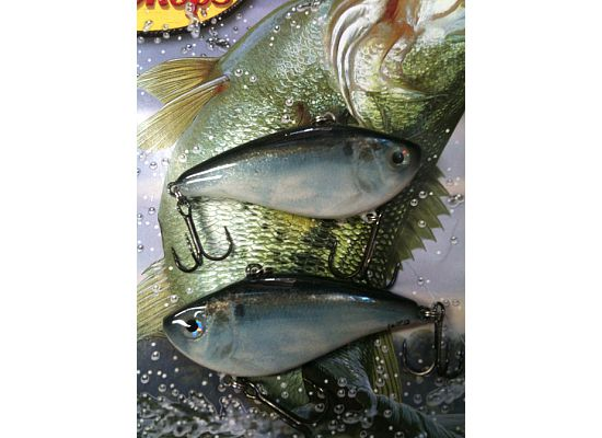 photofinish threadfin shad 2.jpg