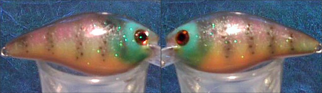 Infant Sunfish