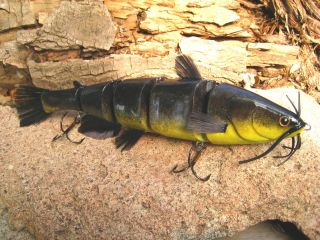 yellowbelly catfish