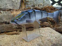 a new catfish