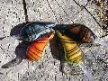 Wicked Craw Series