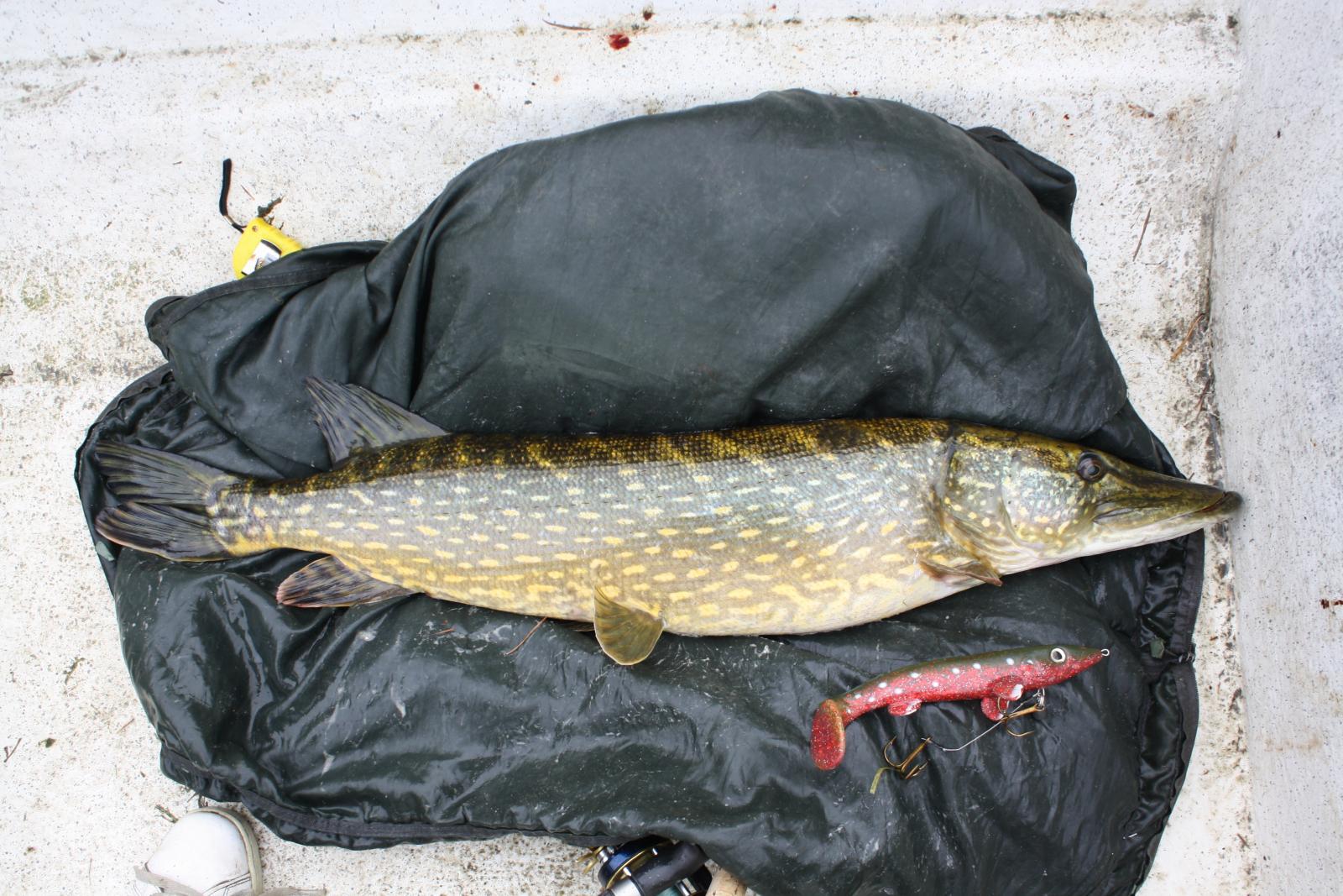 fiske 059.jpg