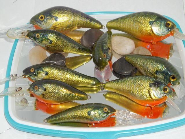 School Of Foiled Bluegill_1.JPG