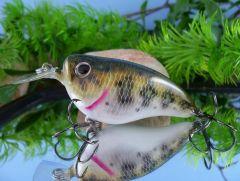 Little Bass