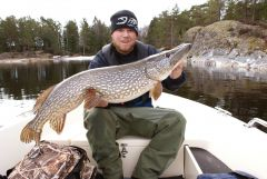 Another nice pike caught 2010