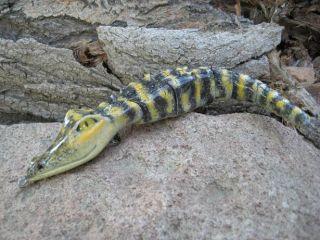 alligator topwater