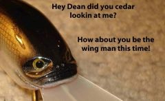 Did you cedar? If I had Balsa I would ask her out!