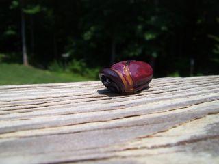 """1"""" Junebug Popper"""
