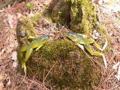 Bog Baits Bog Frog And Bog Gills