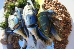 Pile o' fish