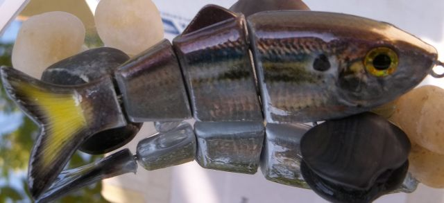Foiled Threadfin Shad (2)
