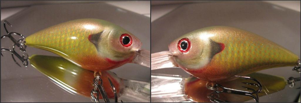 Red Ear Green Sunfish