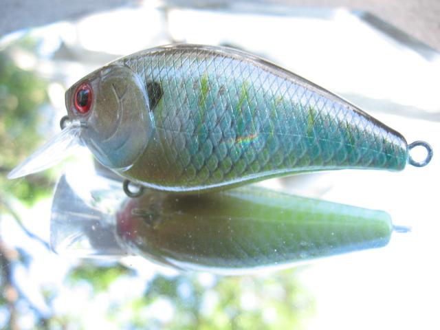 Rainbow gill