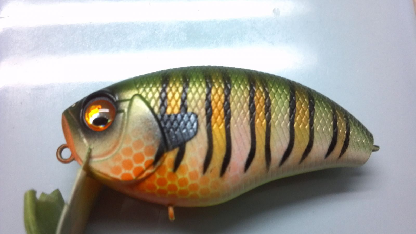 Tiger Bream