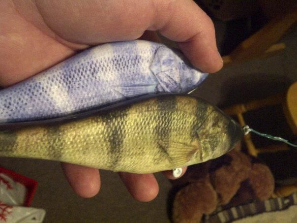 Albino perch and reglular perch..6 inch wood glide baits