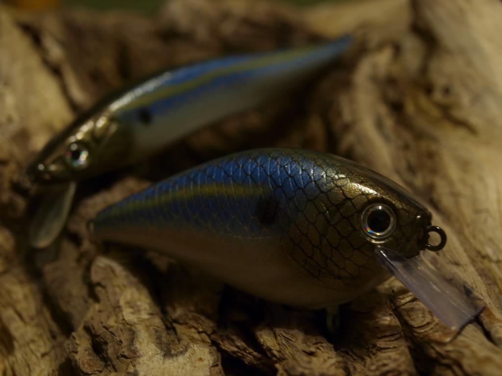 Royal Threadfin Shad