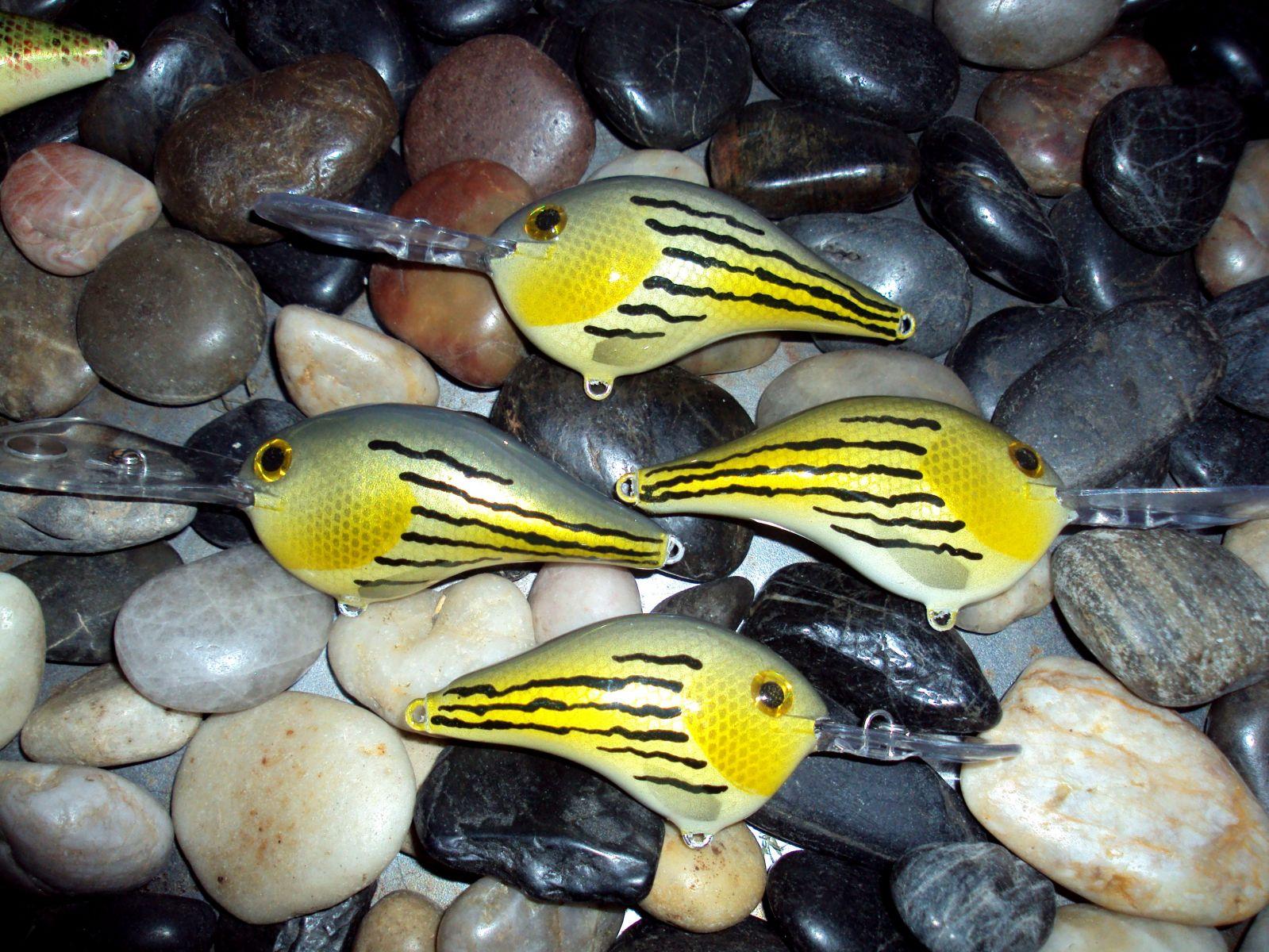 barfish rapala
