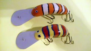 Striped Aussies