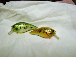 some kind of minnows