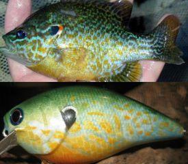 New Sunfish Attempt