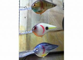 Gill, Bone, Barfish