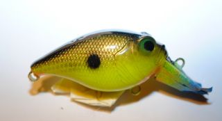 Rookie Sexy Golden Shad