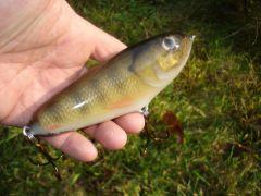 "6"" Fish skin glider"