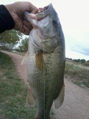 4.16 pound bass On My Fuzzy Craw jigs