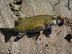 2012 smallmouth#1