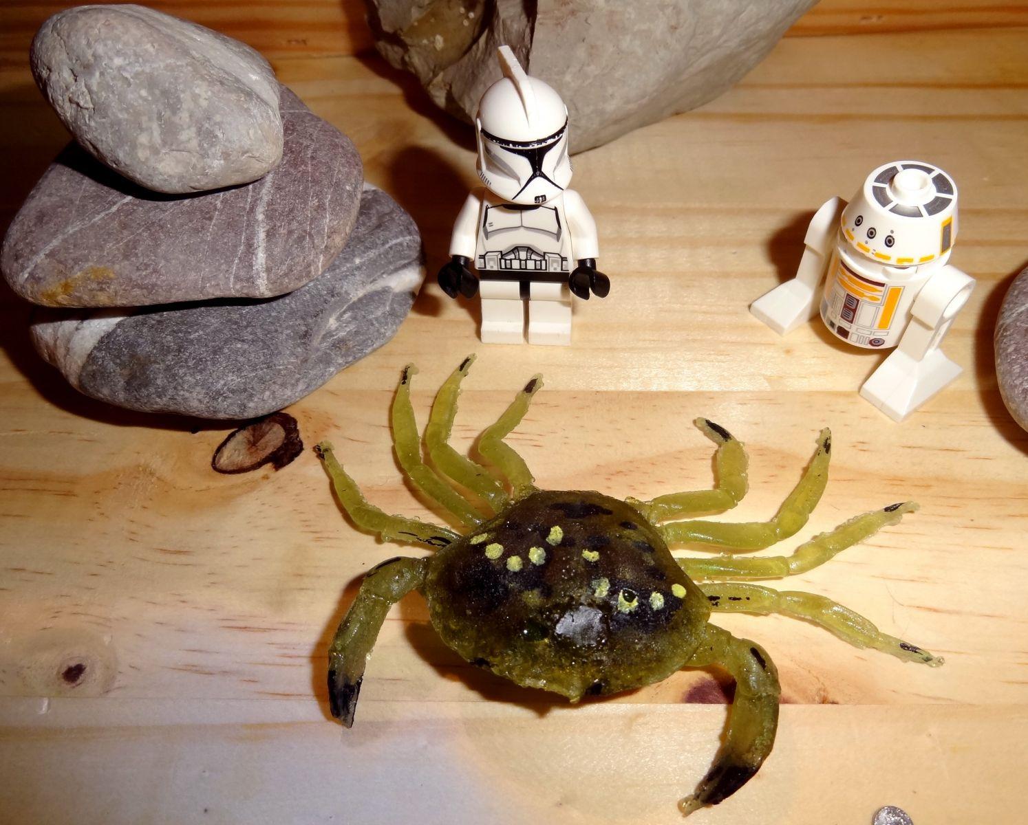 Green crab (Carcinus maenus)...