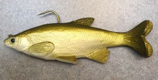 golden shiner swimbait