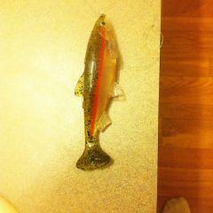 Light trout swimbait