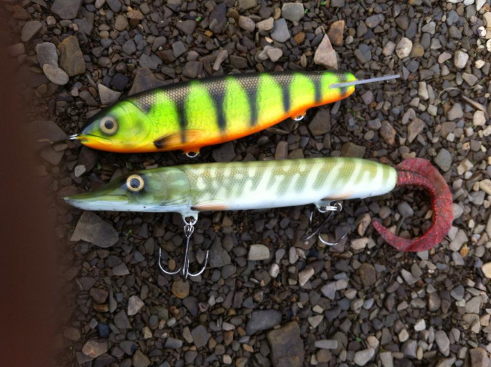 Gliding Trout & Jacktail