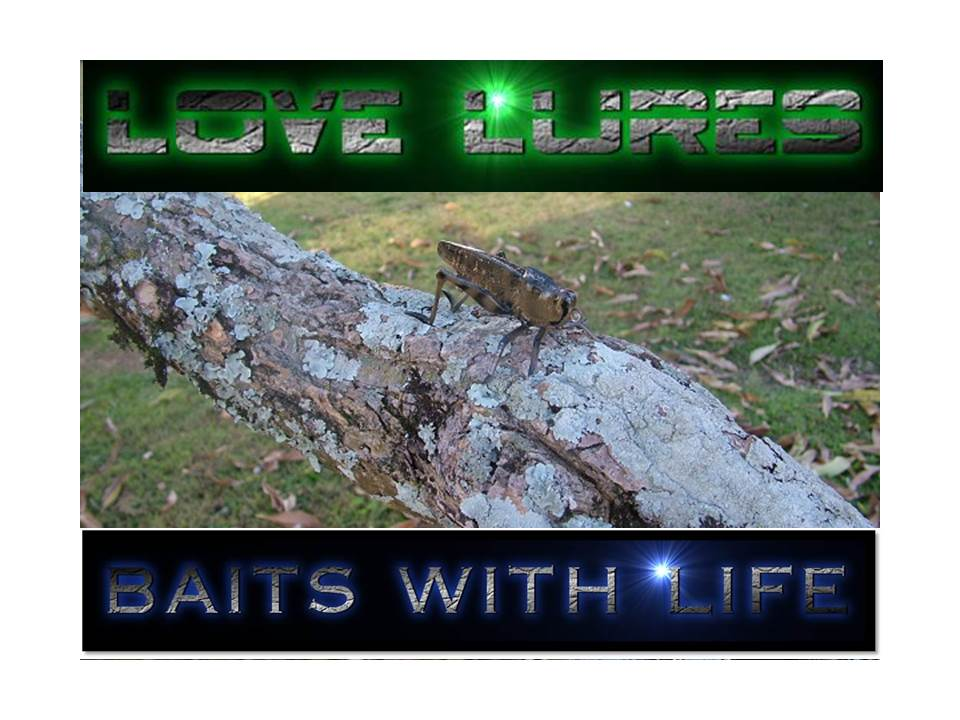 LOVE LURES