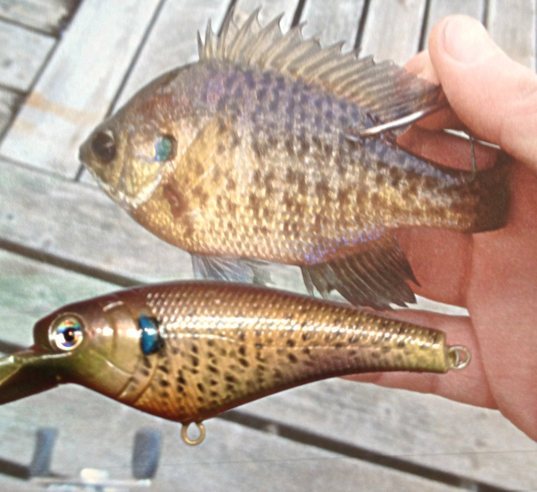 bluegill pattern
