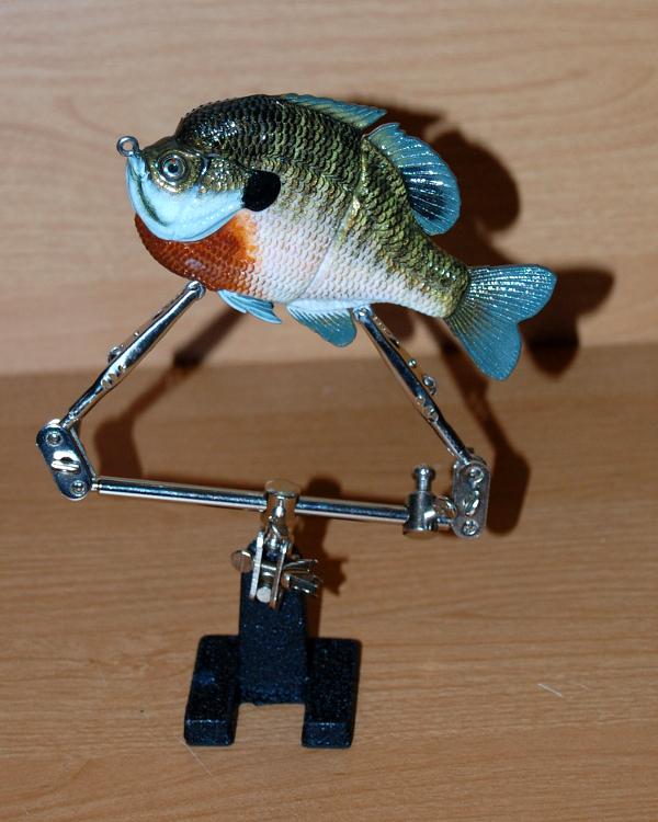2 Piece Male Bluegill