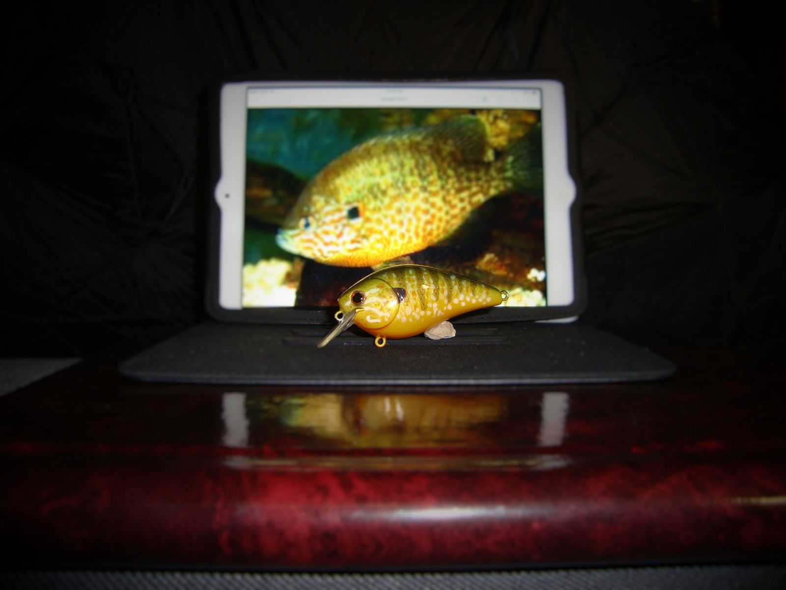Female Pumpkinseed Bream