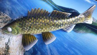walleye 1