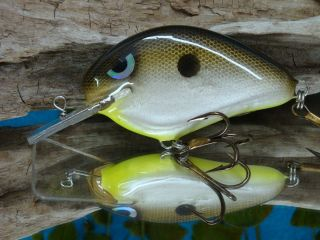 Chart belly Shad