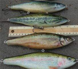 Glides, Topwater Walkers and a Sinking Glide