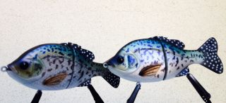 """6"""" breams/gills in crappie pattern"""