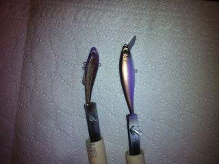 Bronze&Purple