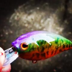 Rainbow Crappie