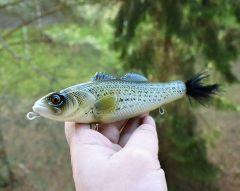 "top water glider 8"" striped bass"