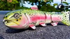 Rainbow Trout Swimmer