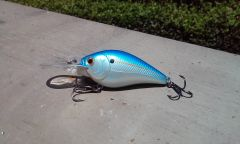 Blue Shad on the RC 1.5DD Crankbait